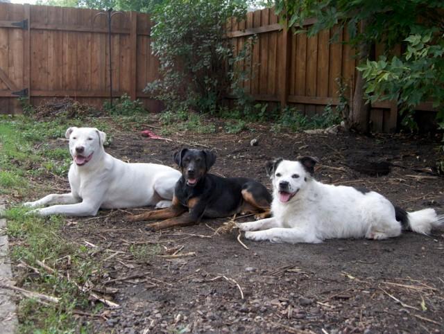 Team Mush Puppies